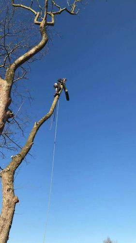 Elagage abattage arbres Douai