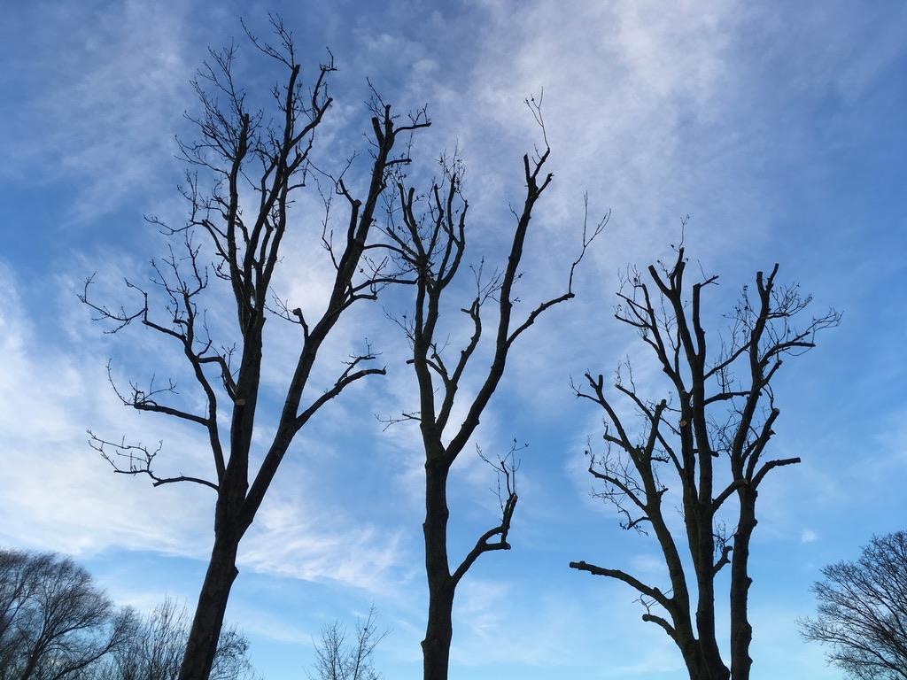 Elagage d'arbre Douai