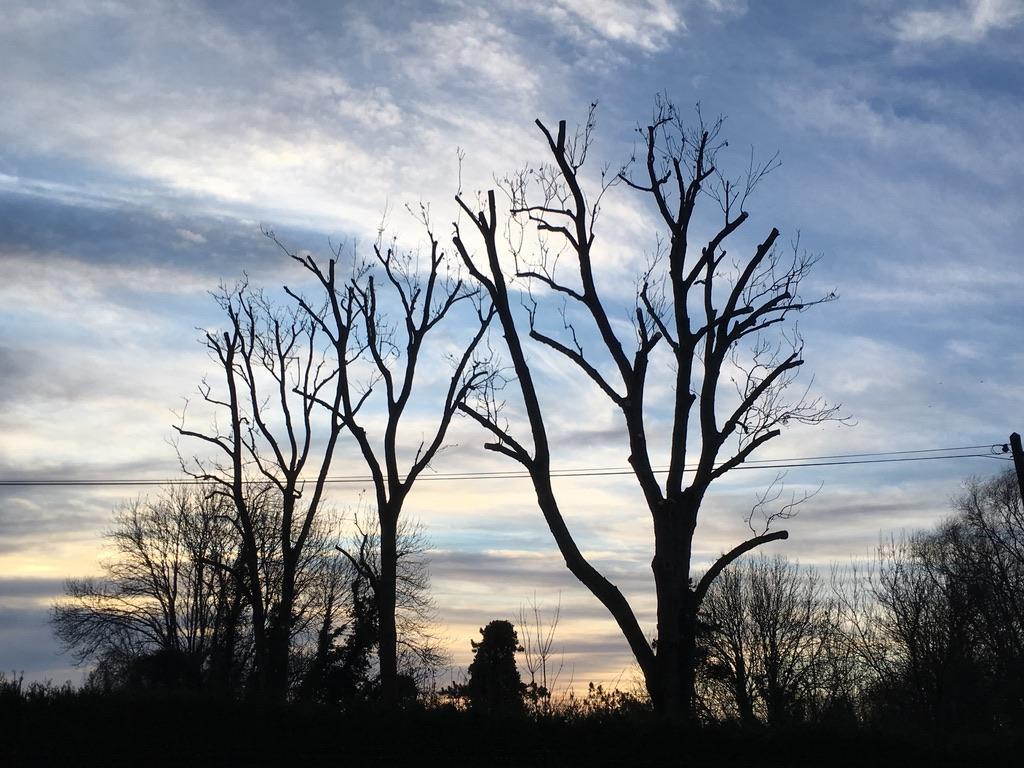 Elagage d'arbre Tortequesne